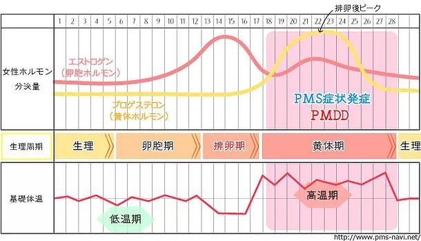 須賀川の整体sasukeneの生理痛改善施術。エストロゲンの作用。